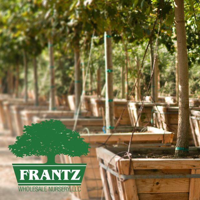 Frantz Whole Nursery Llc Growers Of Superior Quality